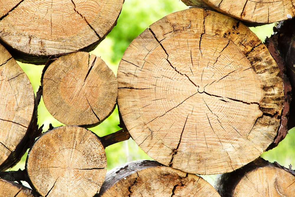 pasta legno